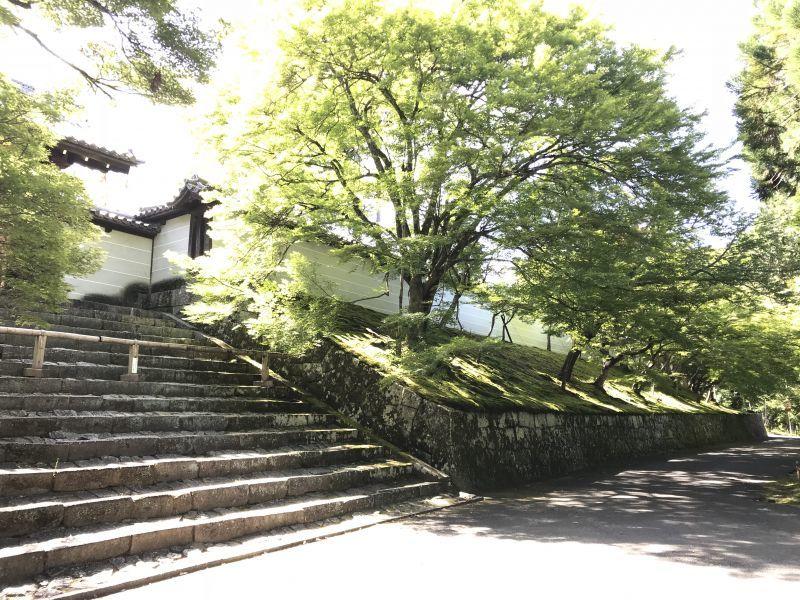 葵祭を終え、緑の深まる京都です ♪